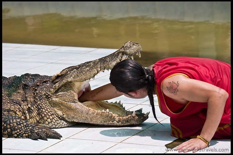 Dangerous Crocodile Show