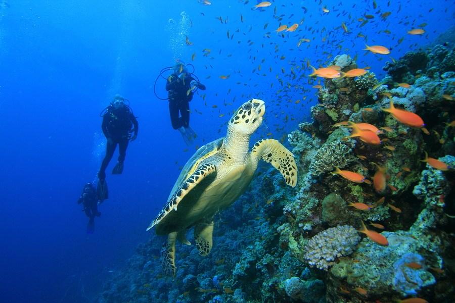 scuba-diving-tour-in-dubai